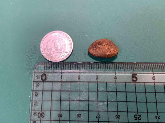 オリジンドッグフードの粒の大きさ