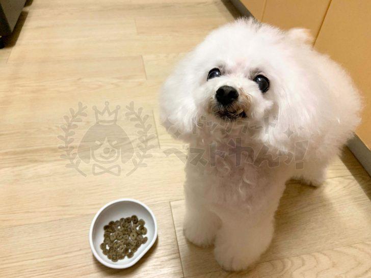 ドッグフードをふやかすメリットと注意点を押さえて犬の健康を増進しよう