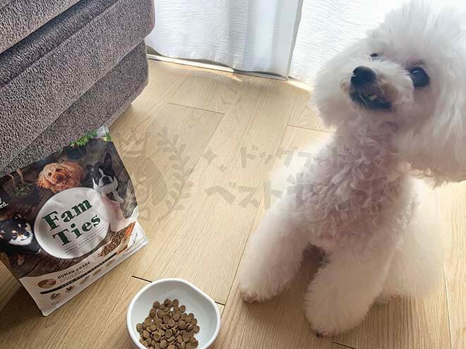 FamTies(ファムタイズ)を食べるのを待つ犬