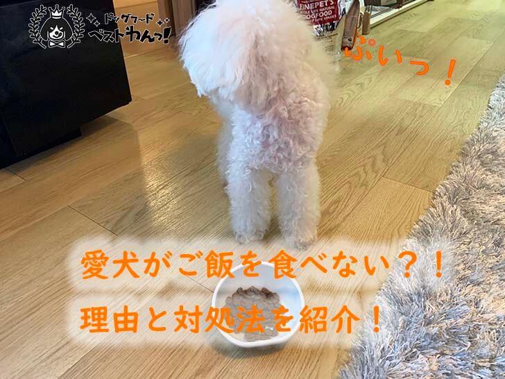 愛犬がご飯を食べない?ドッグフードを食べない理由とその対処法!