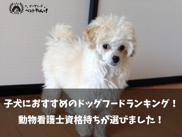 子犬用(パピー)におすすめのドッグフードランキング!動物看護士資格持ちが選びました!