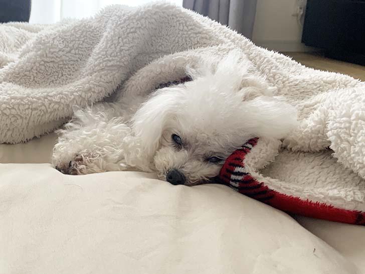 シニア犬用(老犬)おすすめのドッグフードランキング5選!動物看護士資格持ちが選びました!
